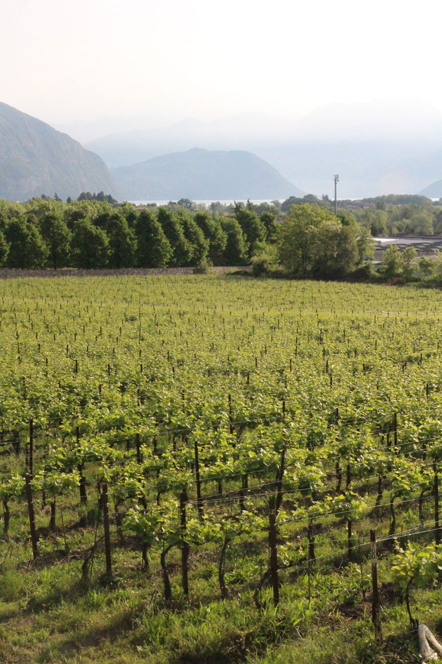 8-Vineyards-&-lake_3114