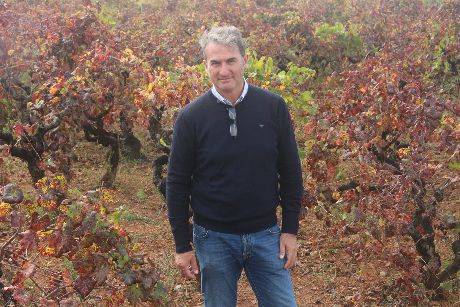 """Gianfranco fino, the self-proclaimed """"archaeologist of the vineyards, """"with his 50-year-old bush-trained Primitivo vines."""