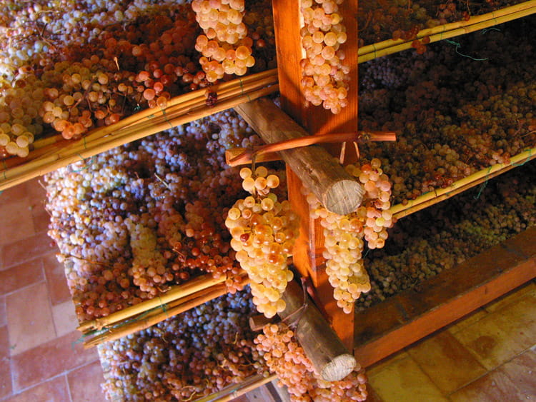 vin-santo-grapes-4056p-min.jpg
