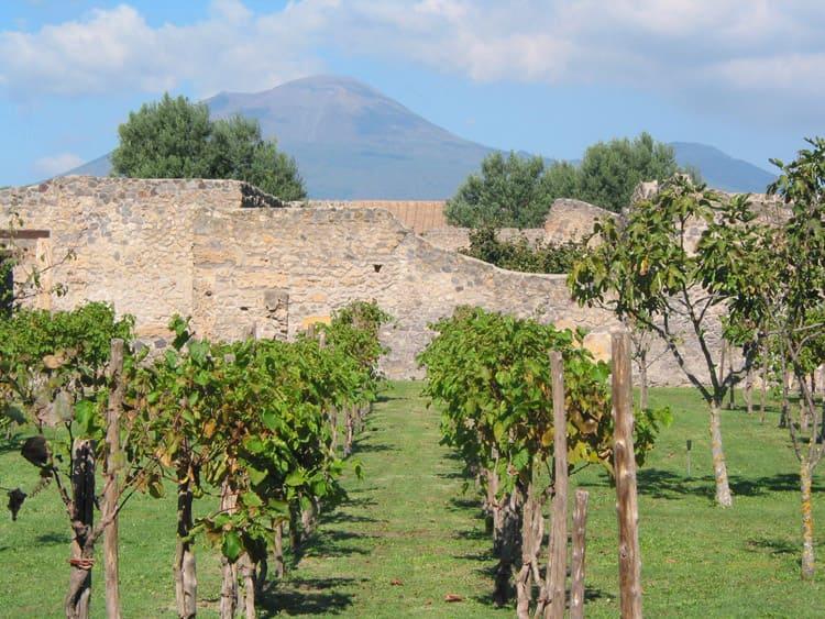 wine tours amalfi coast