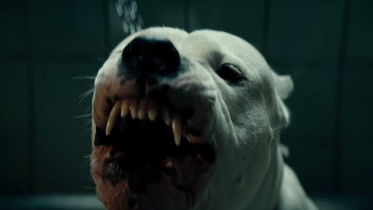 Dogman's first client