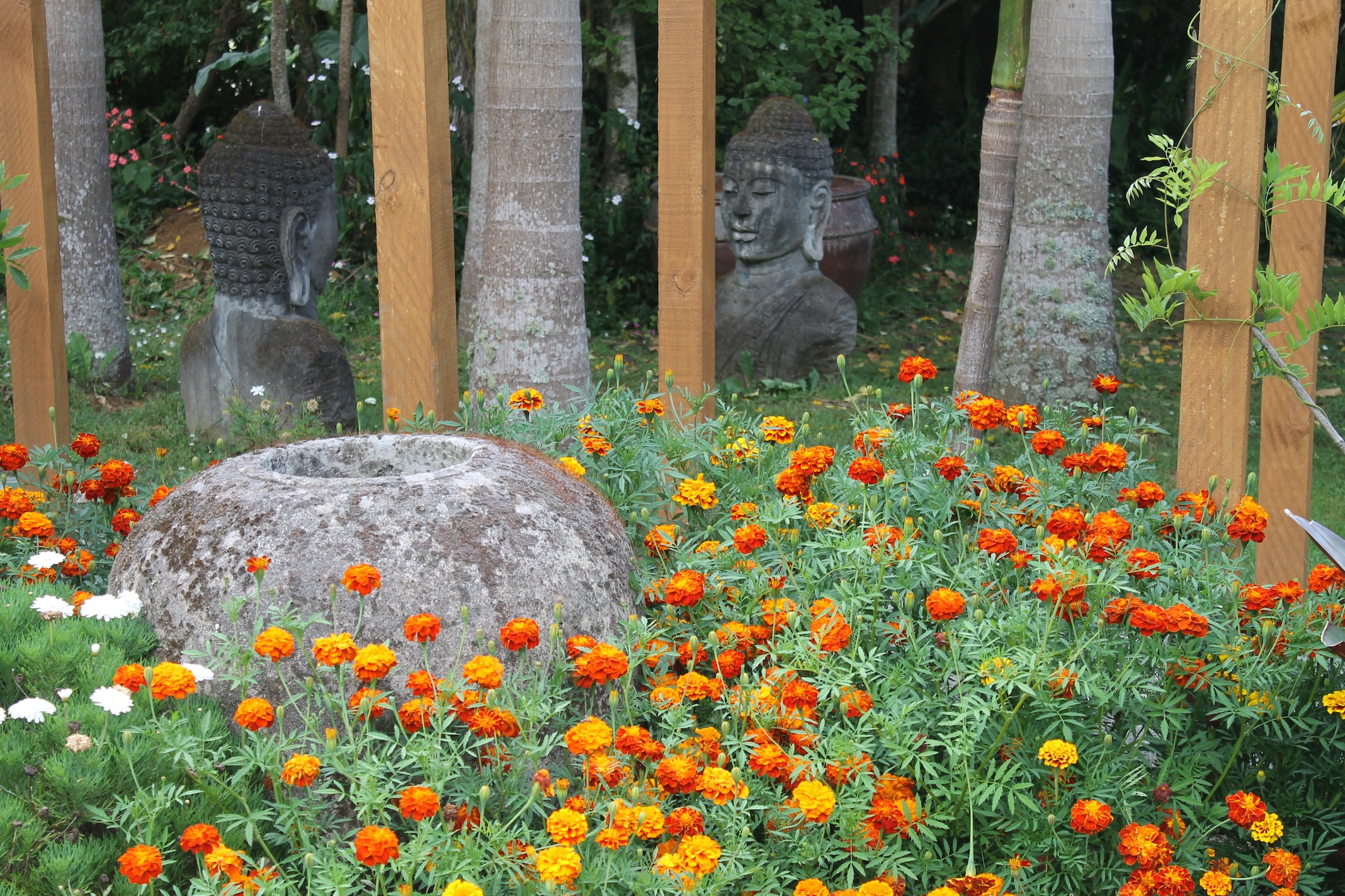 <CENTRE> MARIGOLDS BY TEWHARENUI AWHINA PATHWAY </CENTRE>