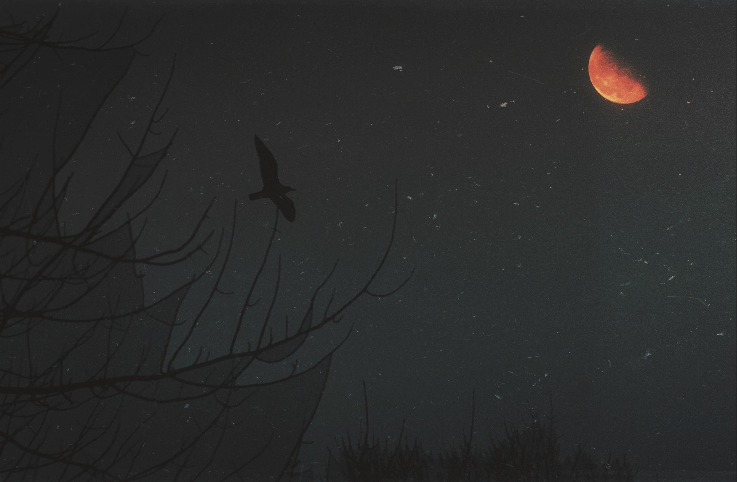 Crow_Gibbeous.jpg