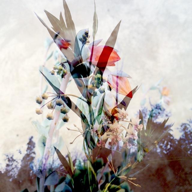 botanicals 3.jpg