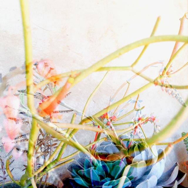 botanicals 12.jpg