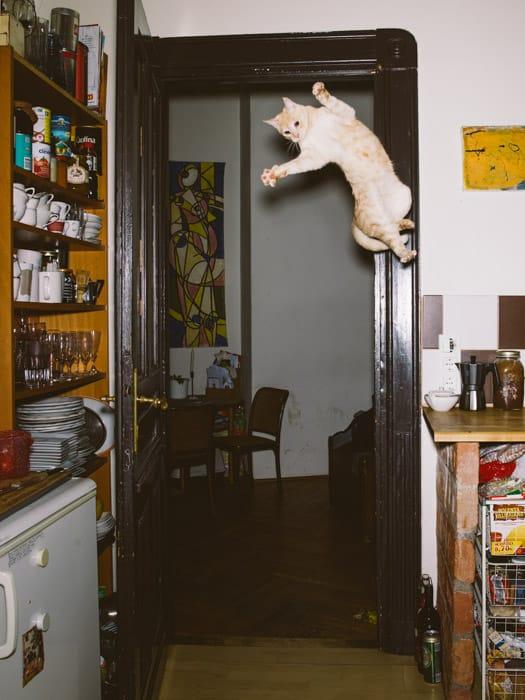 13_catcal_Gebhart_de_Koekkoek.jpg