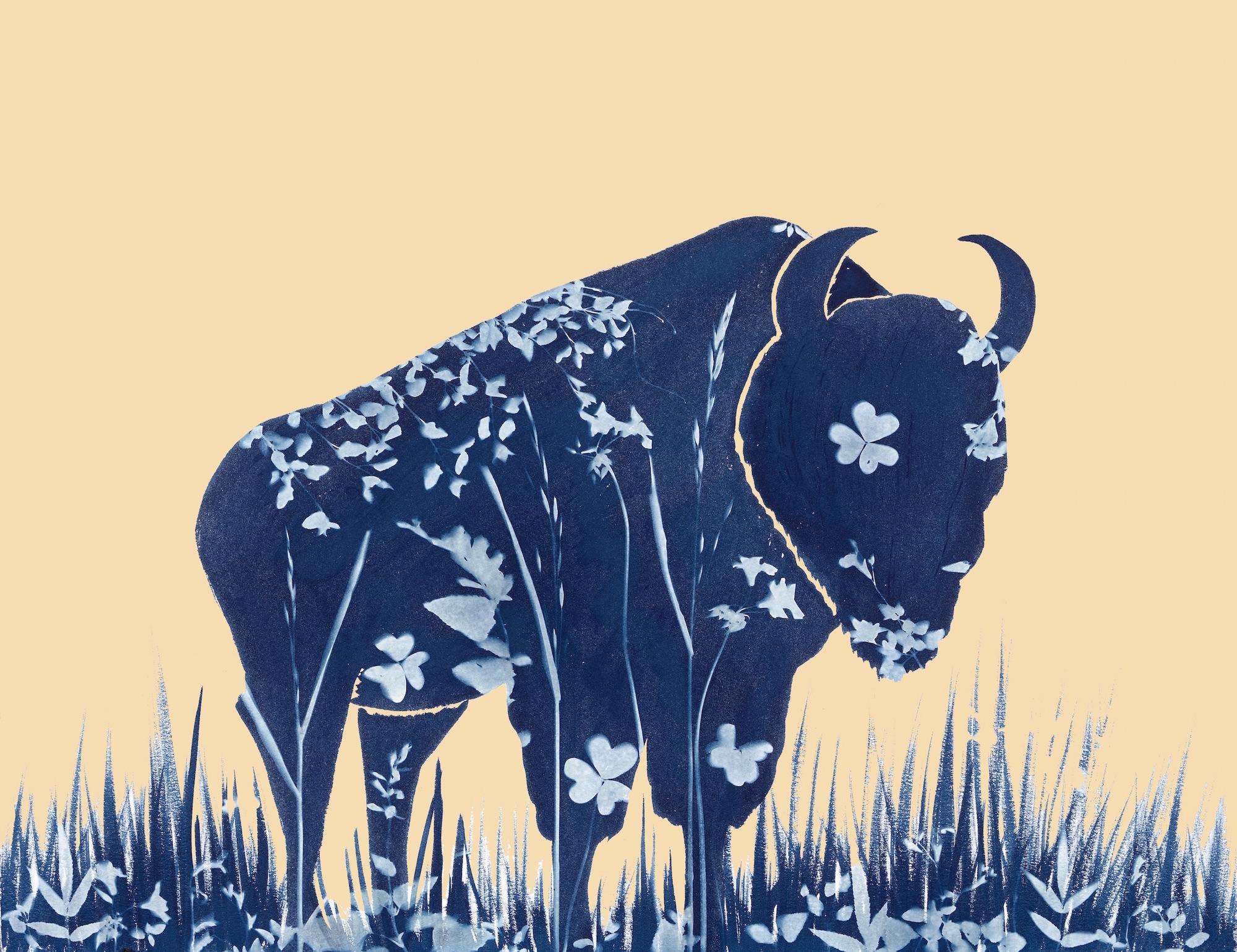 le_petite_bison_Brooke_Sauer.jpg
