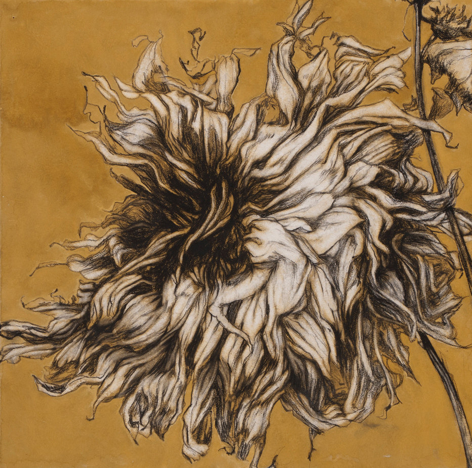 """Fall Dahlia"" Conte crayon & gouache on paper, 22""x22""-SOLD"