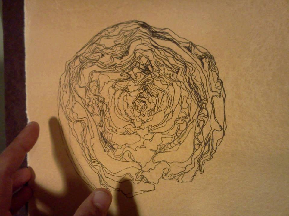 Cabbage drawing in process