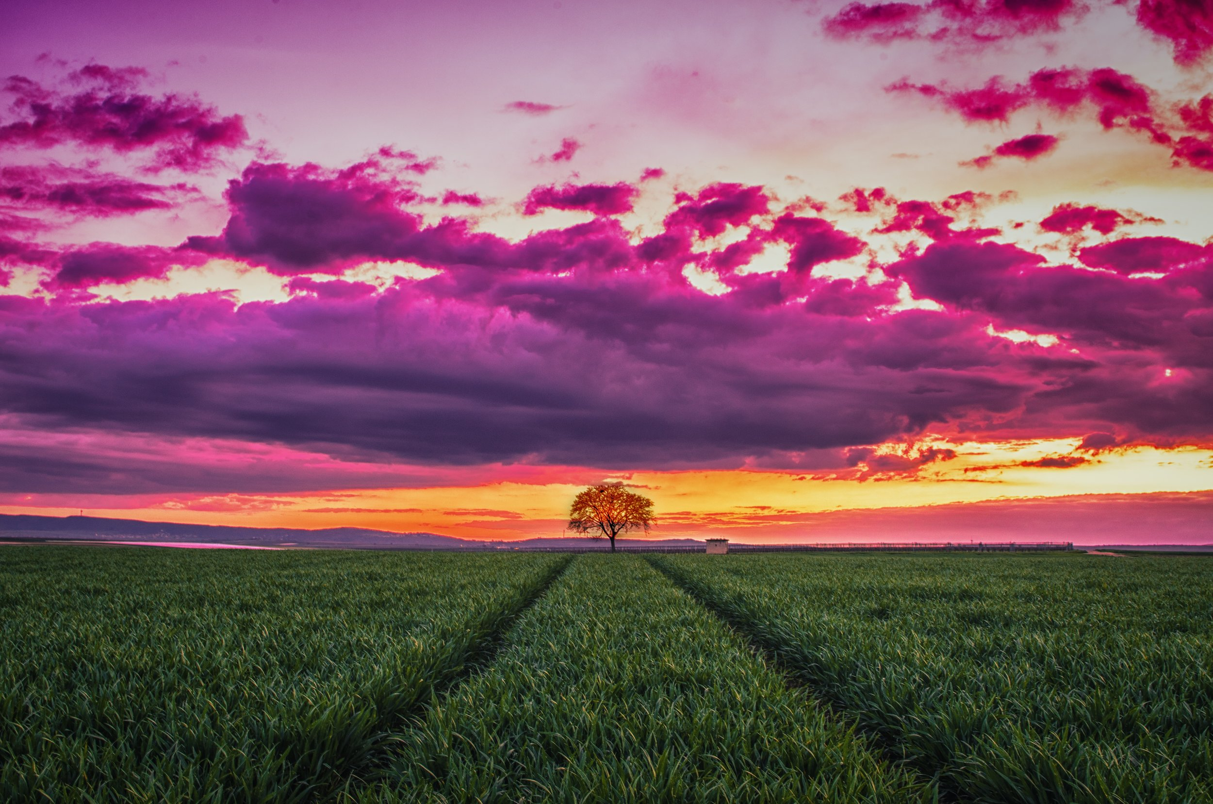 Tree tracks sky