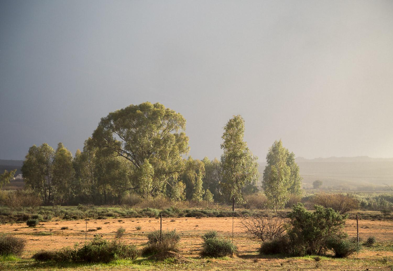 Matjiesfontein Farm, Nieuwoudtville, South Africa