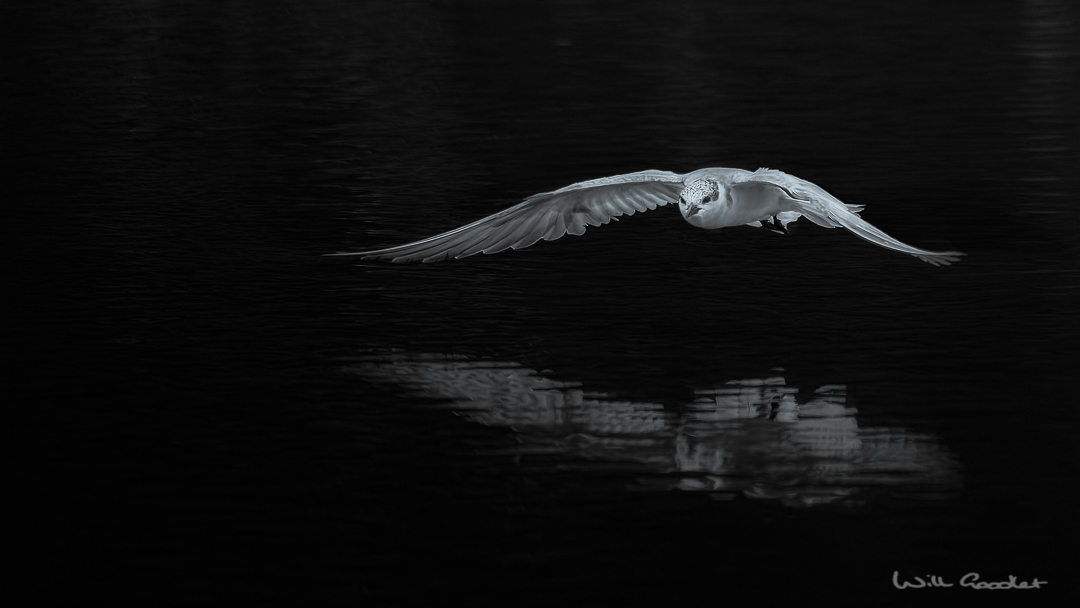Ghost on the water...
