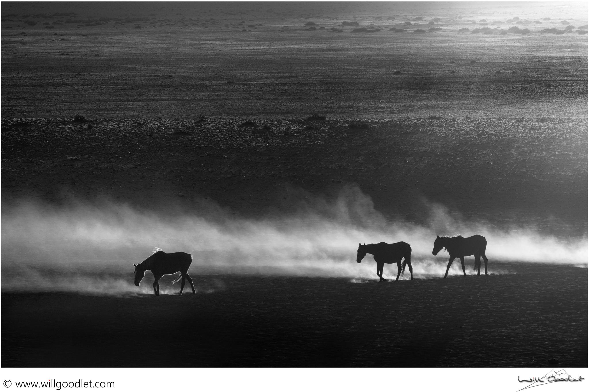 Horses in the morning dust, Garub Pan, Aus, Namibia.