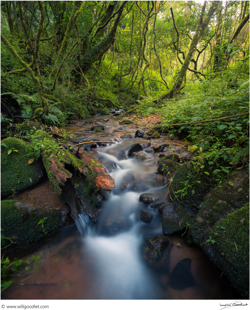 Forest Stream, Woodbush South Africa.