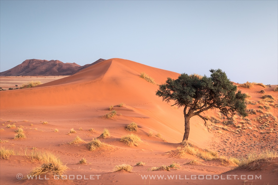 Namibrand Nature Reserve, Landscape with Camel thorn tree.