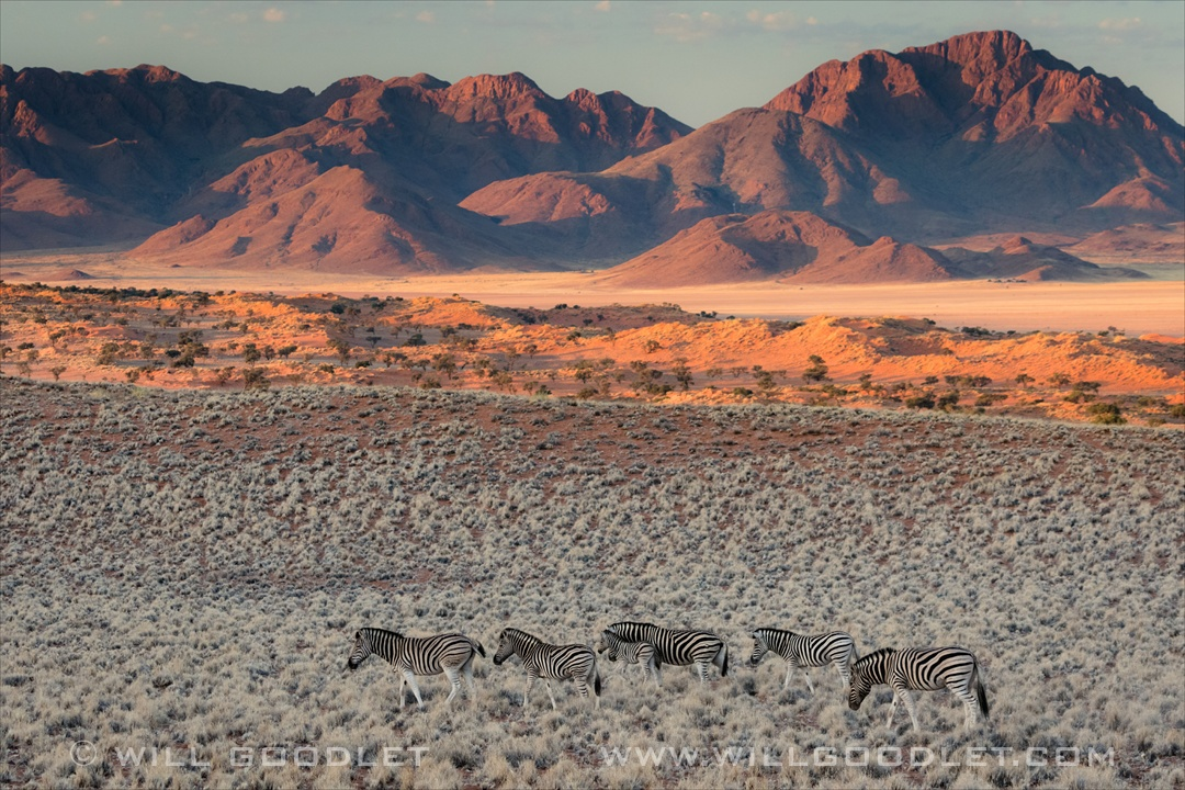 Namibrand Nature Reserve, Zebras and mountain landscape at sunset.