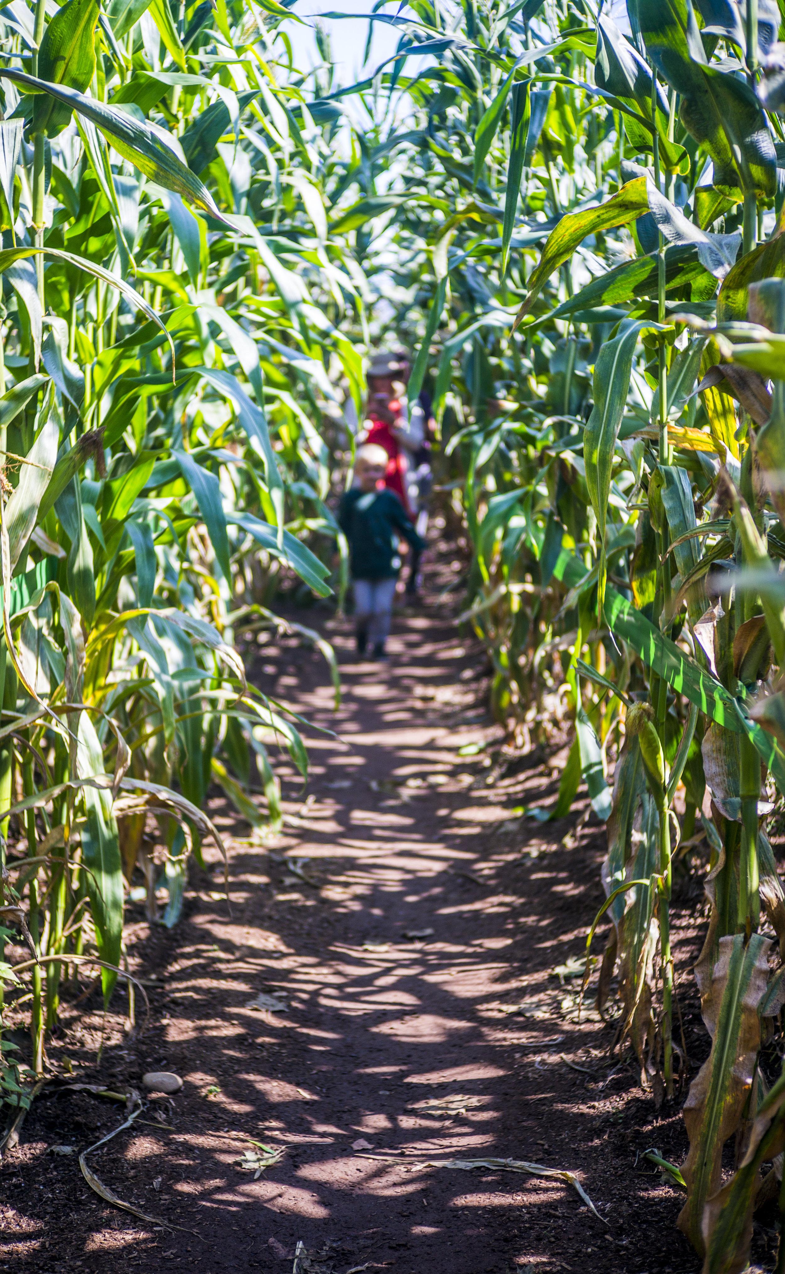 taves_farm.1013.jpg