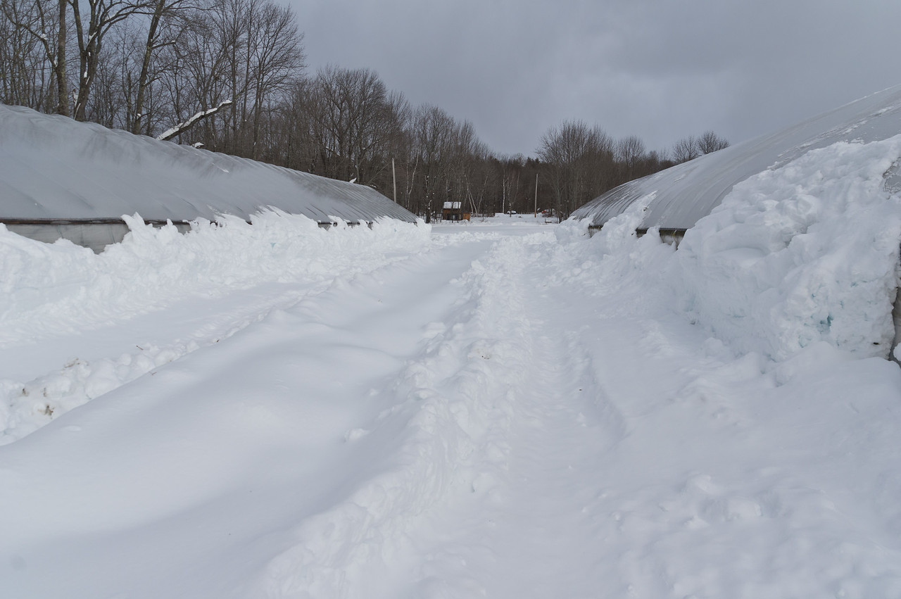 We plowed snow away from the sides of the tunnels so the snow could continue to shed from the sides. With so much snow last week, the snow built up and couldn't fall away! Photo by Adam Ford.