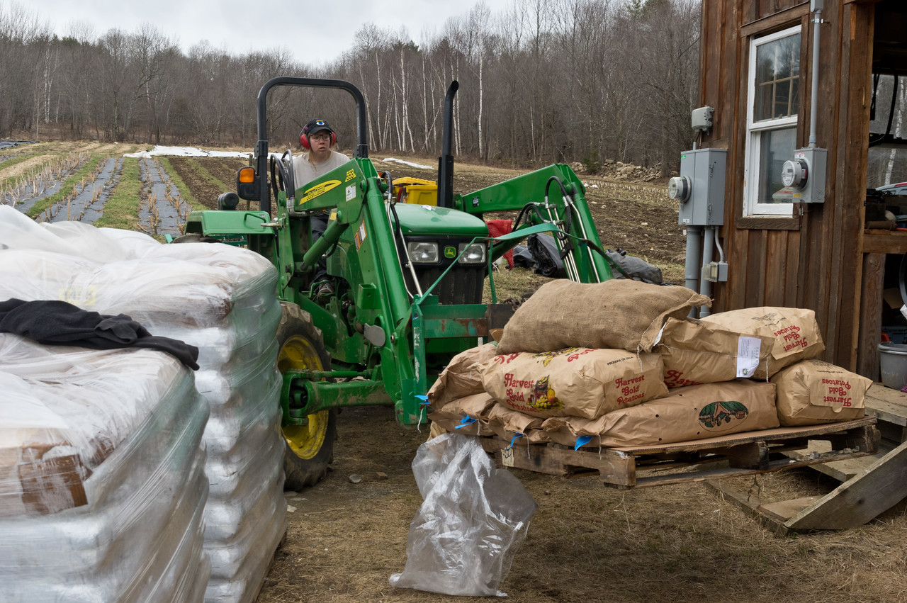 Morgan moving seed potatoes to the second floor of the barn to spread them out to green sprout them before we plant, photo by Adam Ford