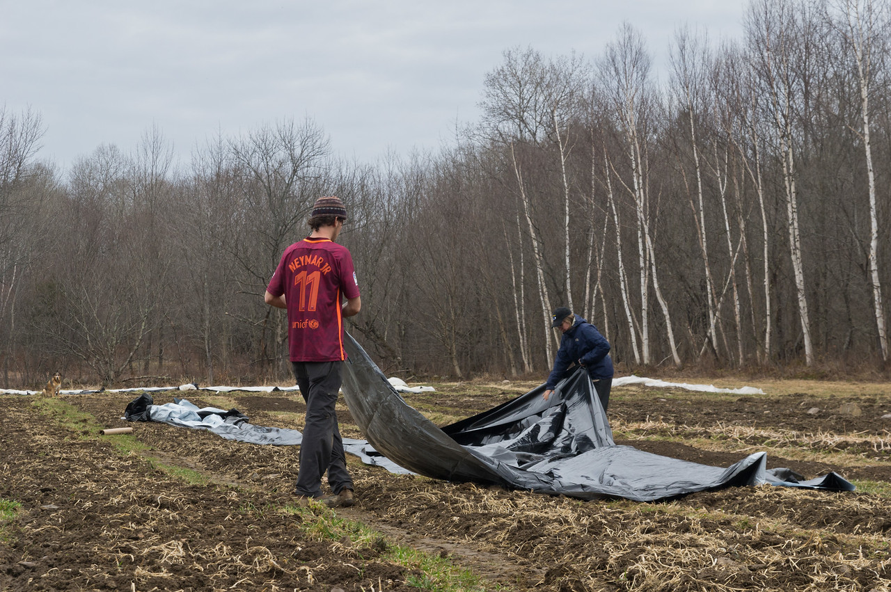 Sam and Morgan laying out a silage tarp on a field we will plant in the eraly summer. We use these tarps to suppress weeds and minimize tillage, photo by Adam Ford.