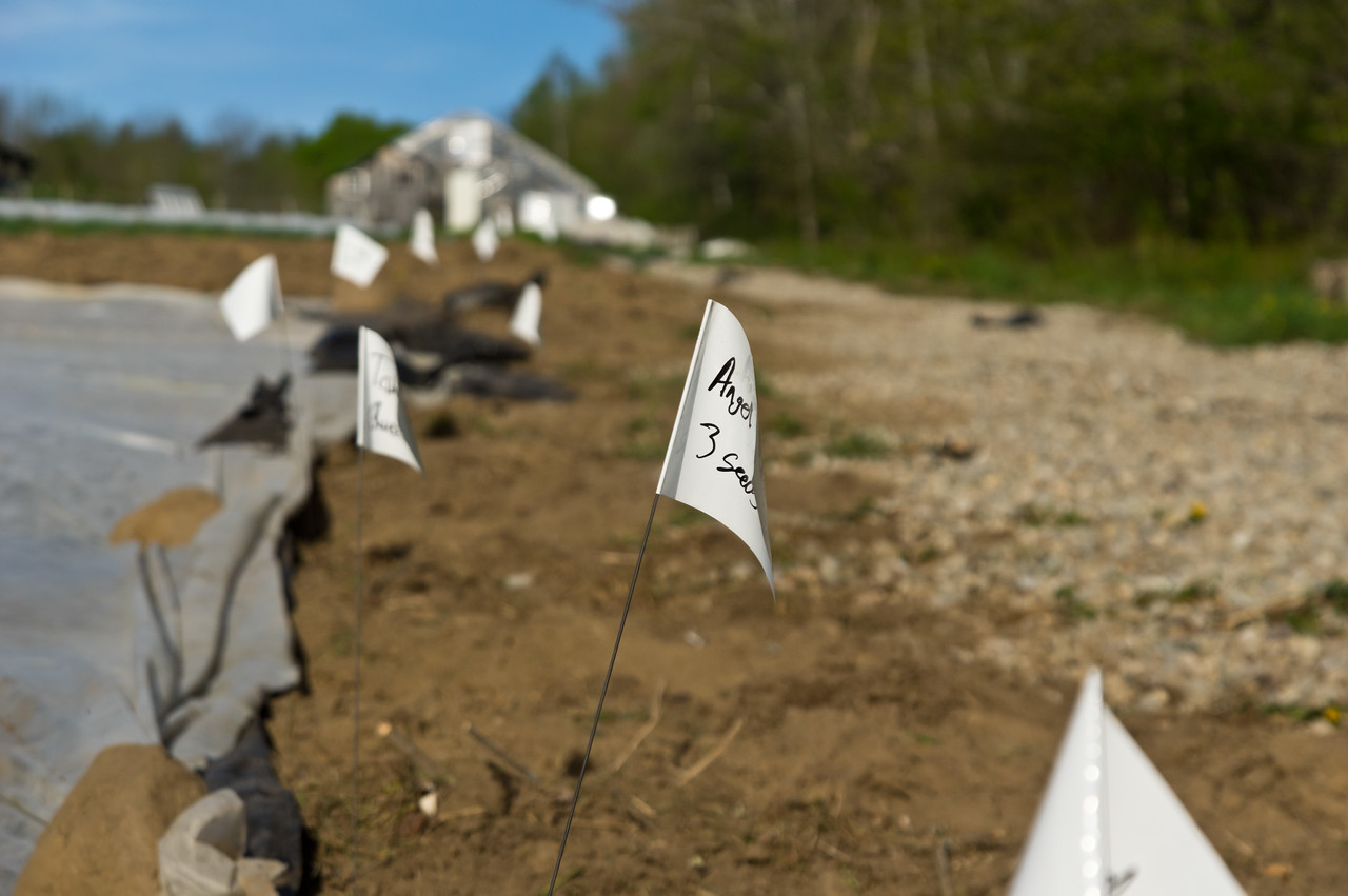 marking the planted winter squash rows with little flags, photo by Adam Ford