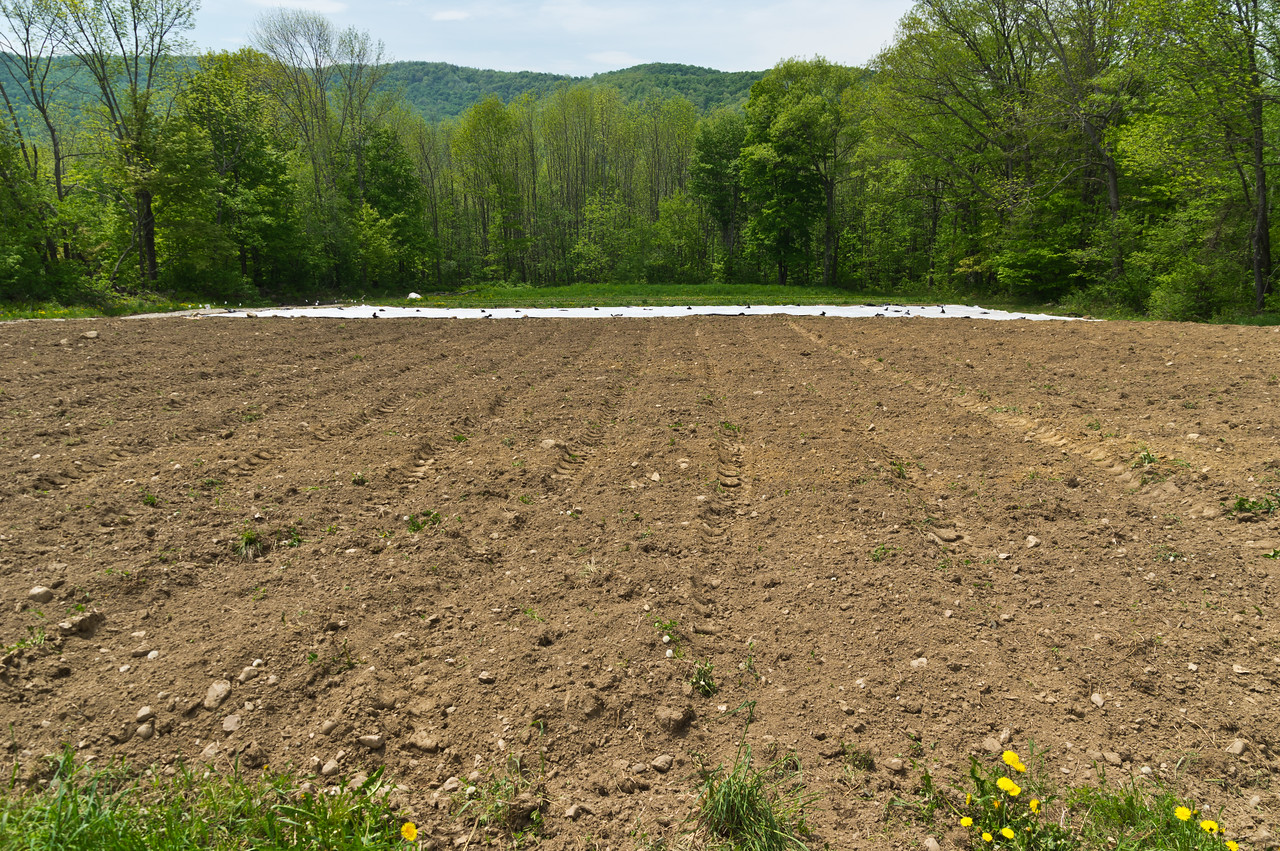 one of our fields after Ryan plowed and seeded our cover crop mix, crossing our fingers for no excessive rainstorms that woudl produce erosional runoff while the cover crop establishes, photo by Adam Ford.