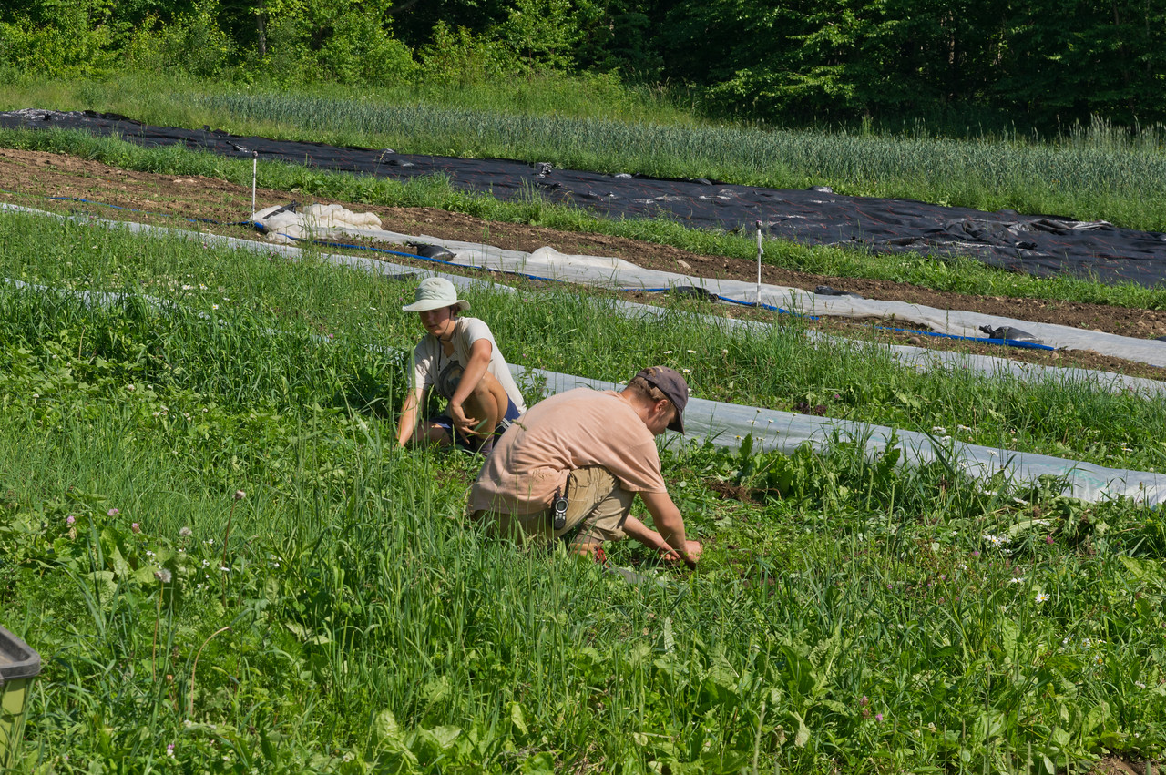 Mikayla and Sam weeding a carrot planting, photo by Adam Ford