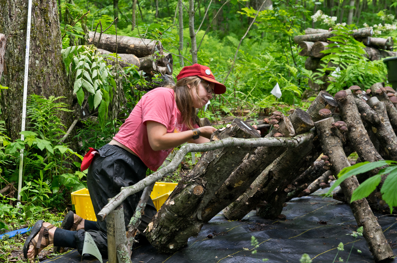 Morgan harvesting shiitakes, photo by Adam Ford