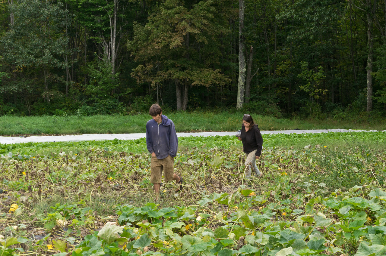 Ryan and I walking around the dying squash vines to discuss the harvest plans, photo by Adam Ford