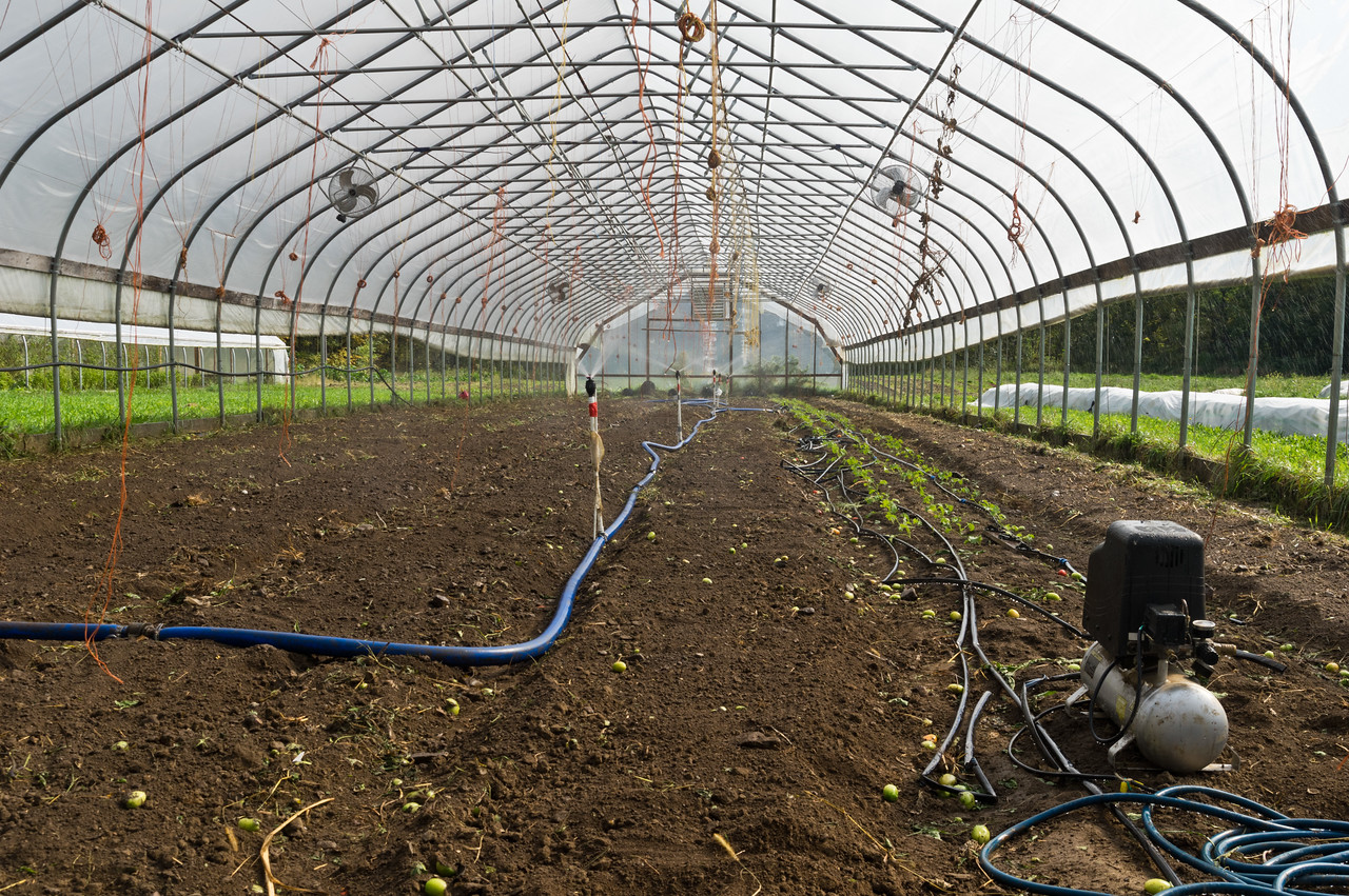many of these empty rows are now transplanted to spinach and seeded to winter greens, photo by Adam Ford
