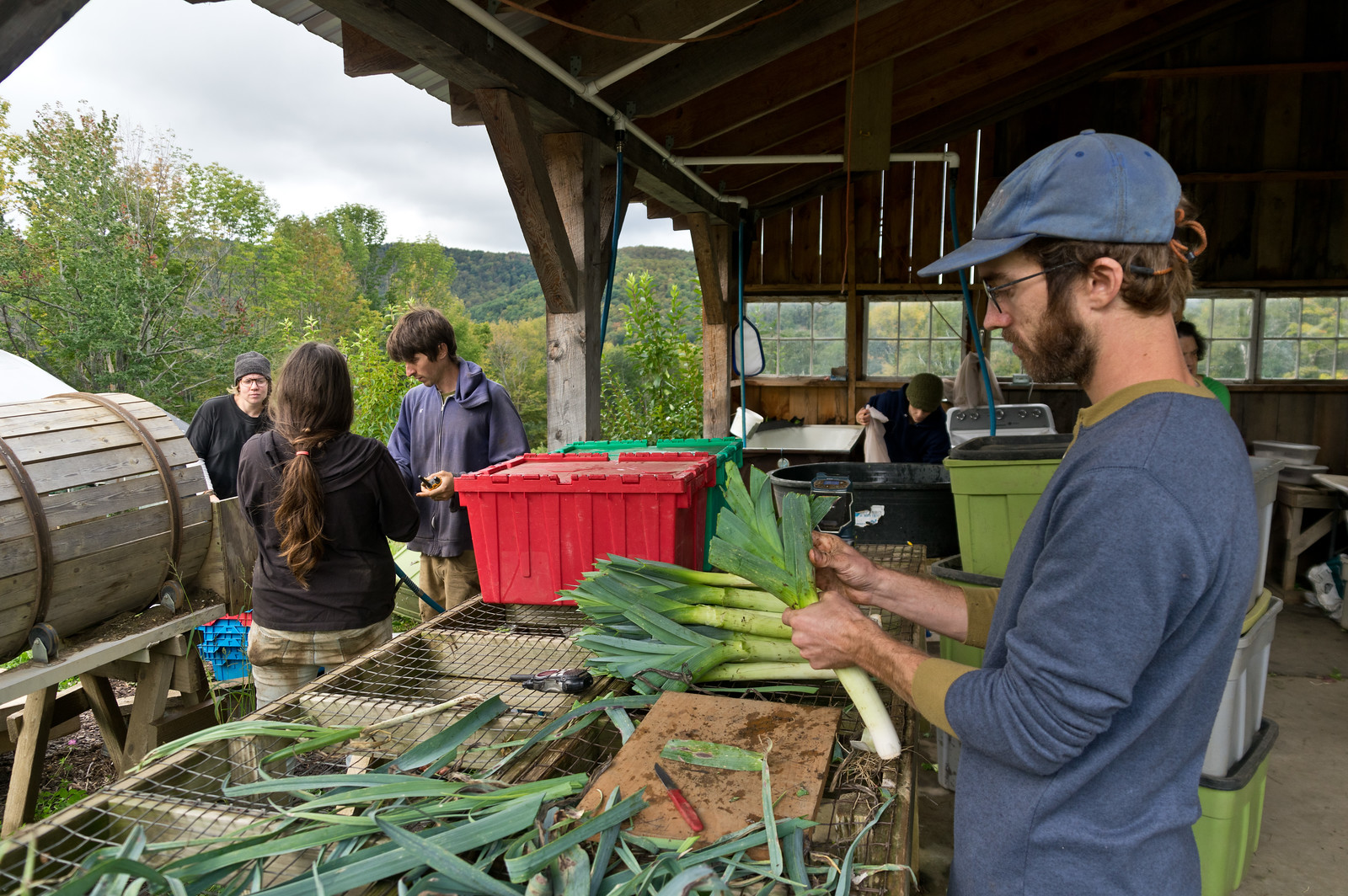 Peter cleaning leeks, photo by Adam Ford