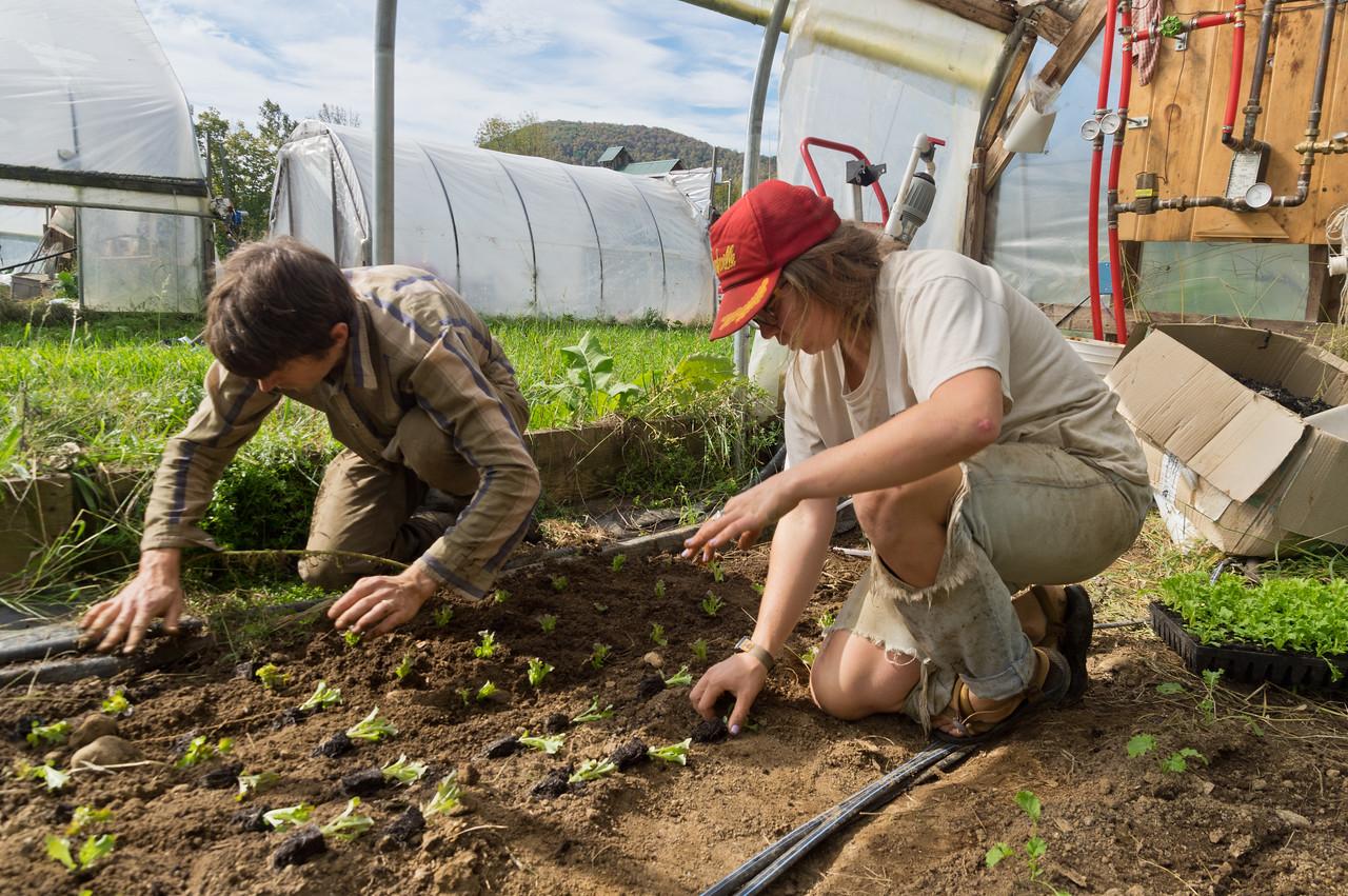 Ryan and Morgan transplanting winter lettuce, photo by Adam Ford