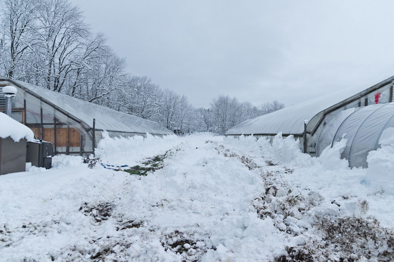 this is what it looks like after the tractor moves most of the snow out of the way, and those sides still need to be hand shoveled to make way for sunlight, photo by Adam Ford
