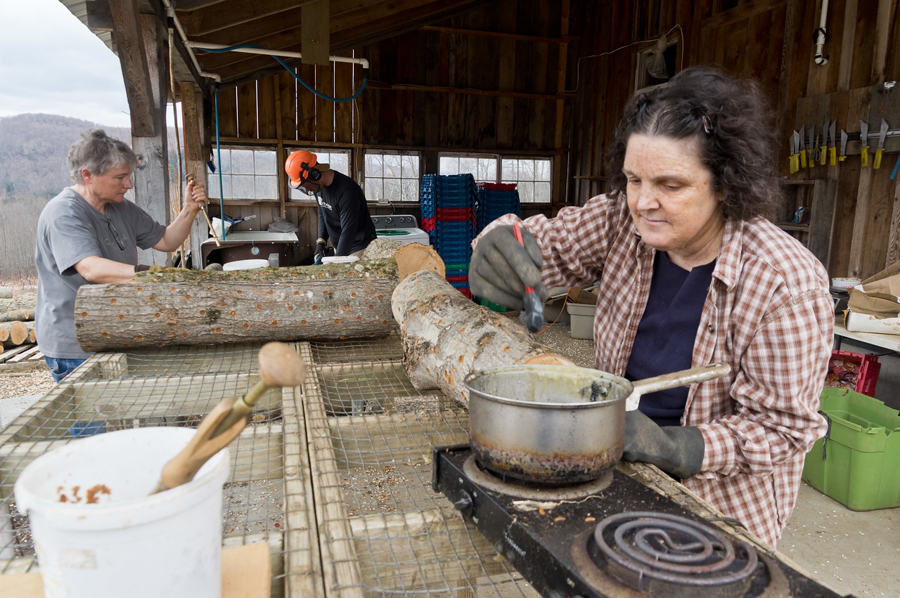 Alice, Cindy, and Dan inoculating shiitake logs… It's cool you can see the whole process here: Dan is drilling holes in the logs in the background, Cindy is getting spawn in each of the wholes, and Alice is sealing them shut with cheese wax, photo by Adam Ford