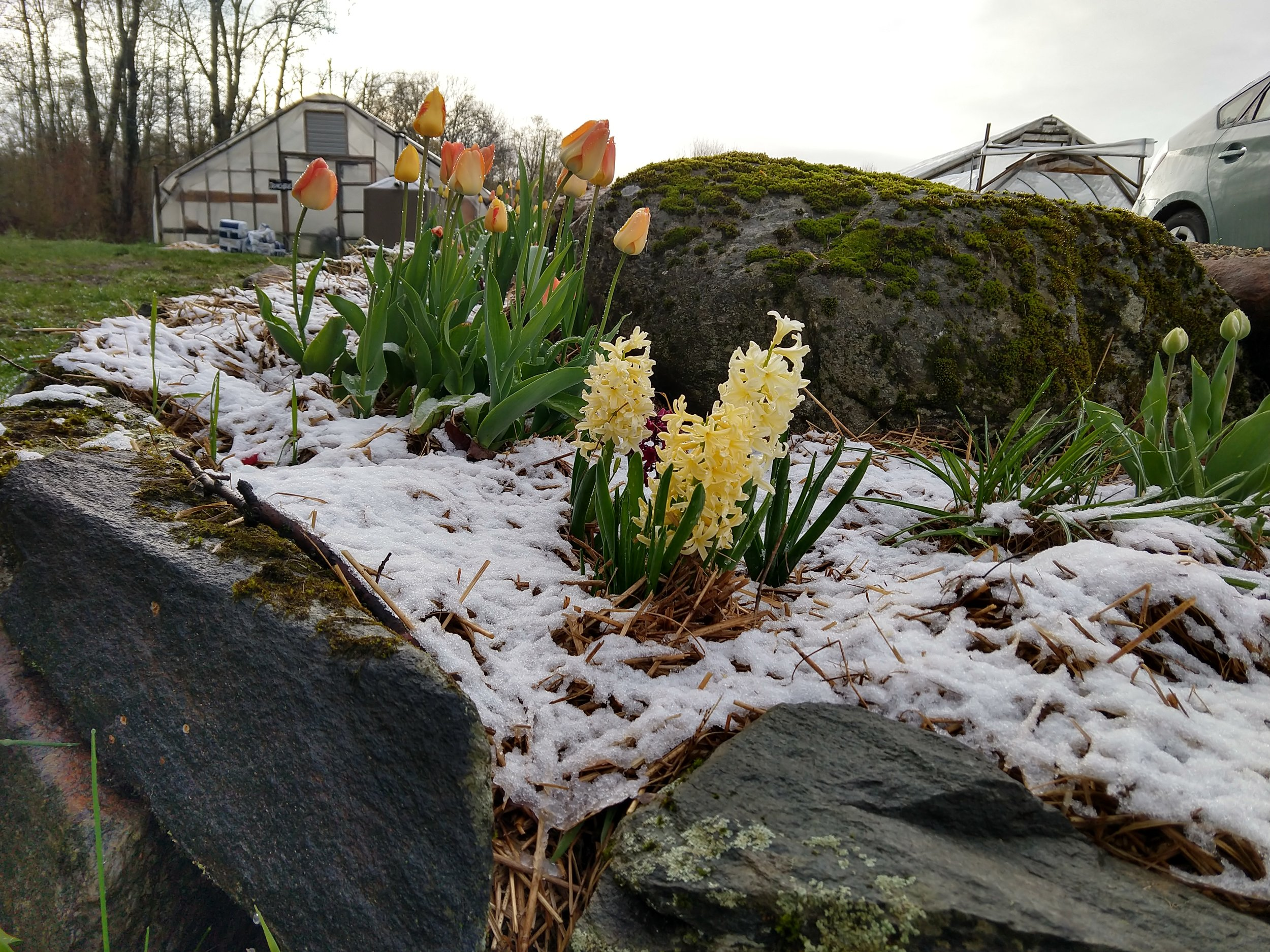 the snow stuck around longest on the flower bed mulch….