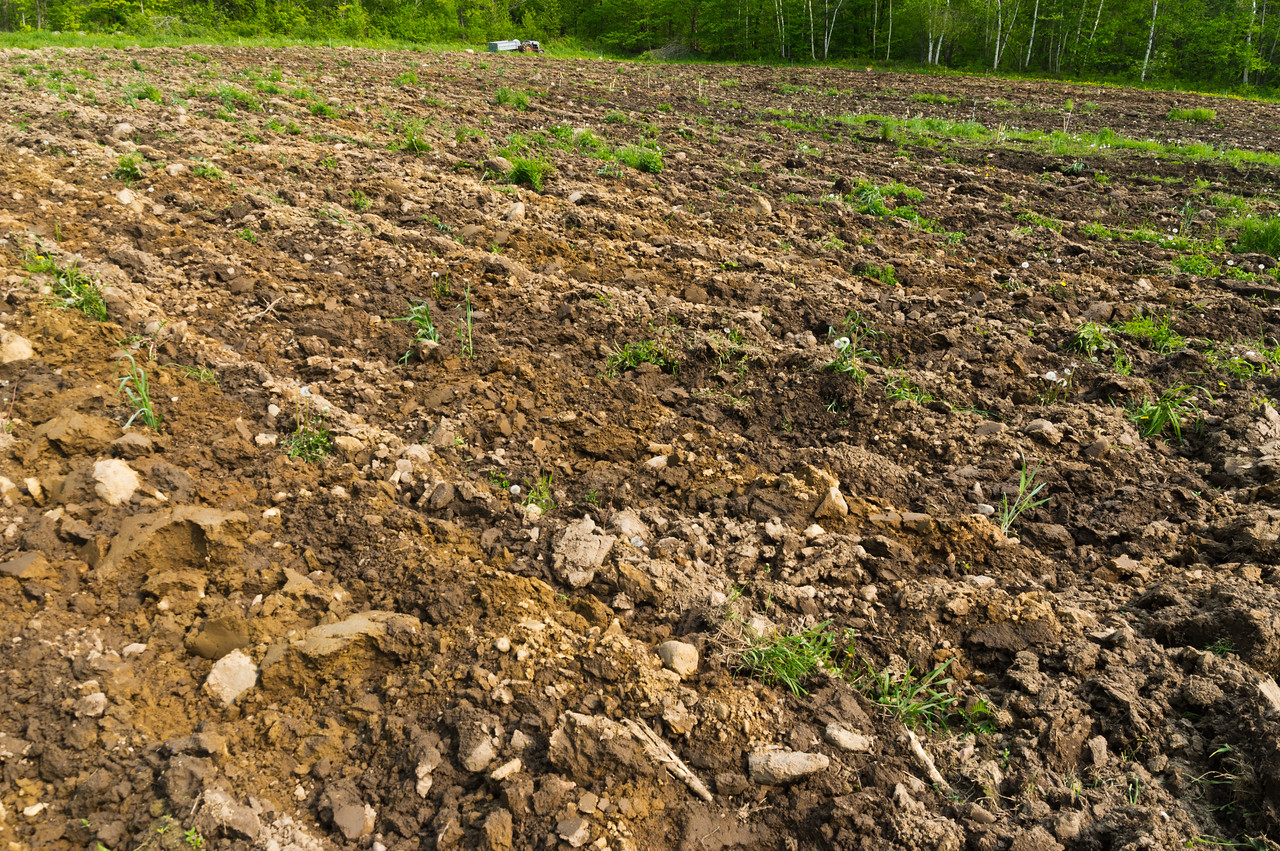 field after plowing, photo by Adam Ford