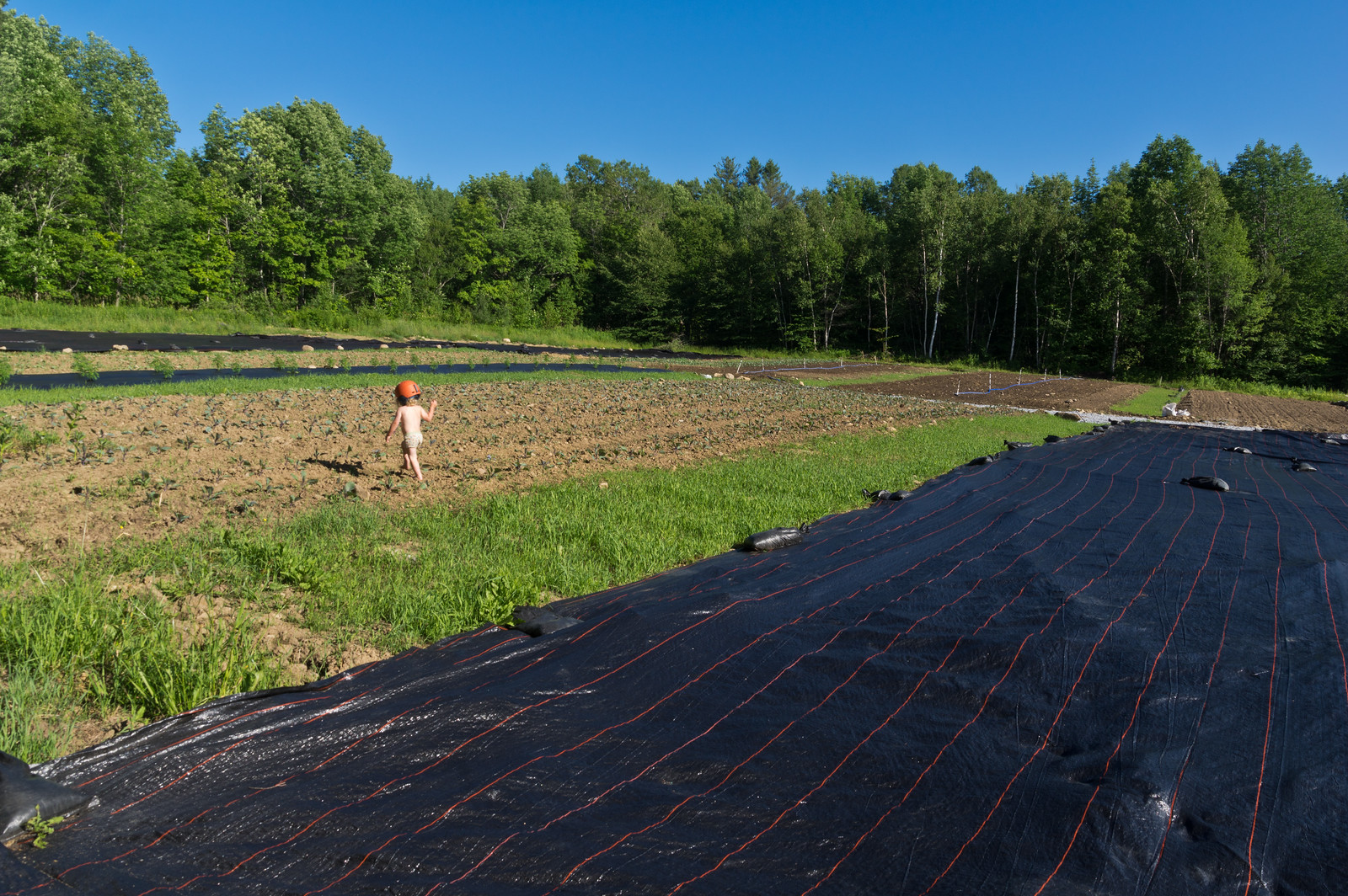after a long afternoon of biking, a toddler chills out by checking out the fall cabbage planting, photo by Adam Ford