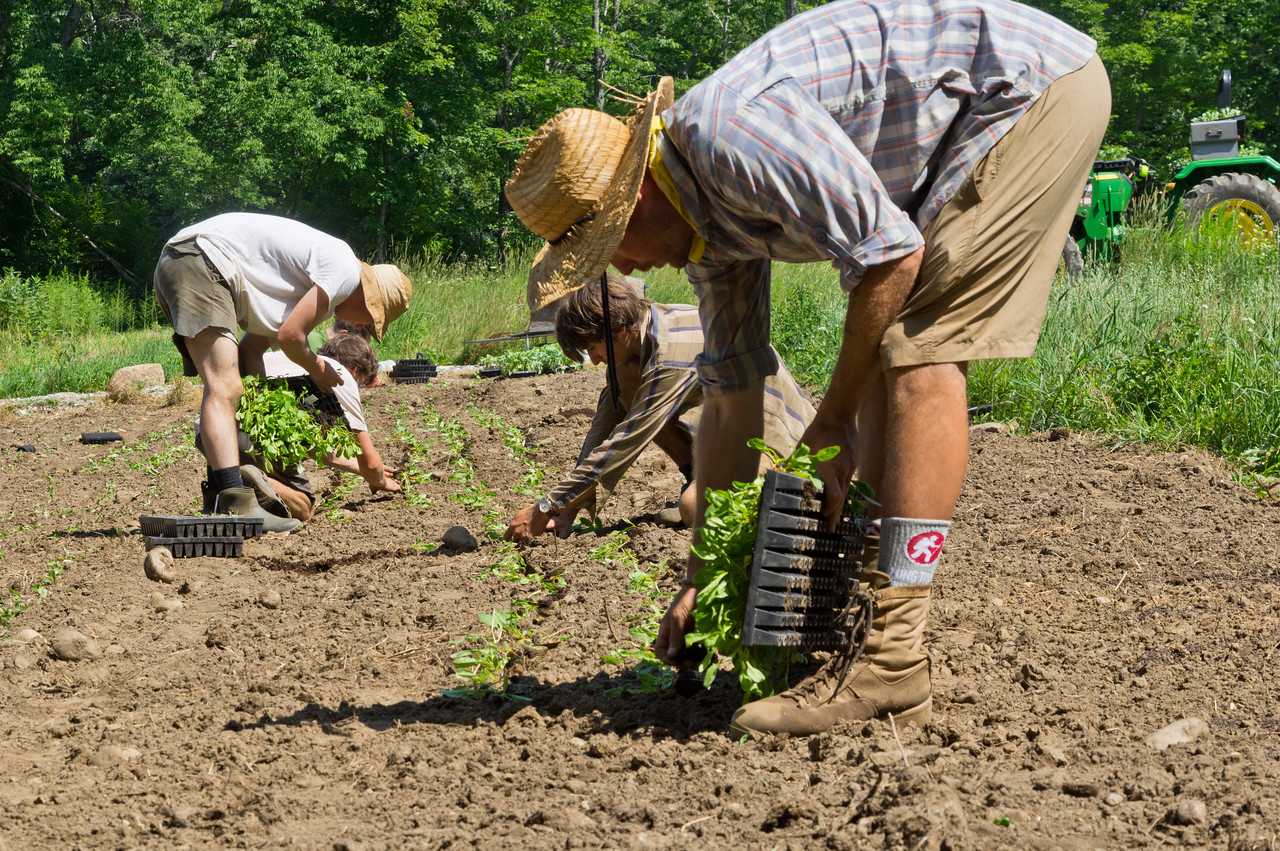 The team planting yellow fall beets, photo by Adam Ford
