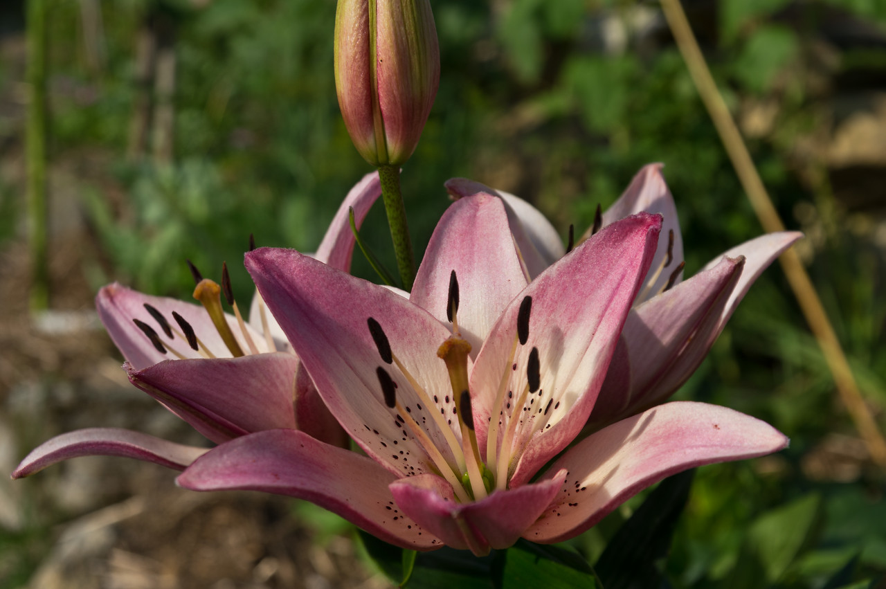 More of Ryan's flower garden…. maybe this is a lily?! I don't know anything about flowers, I'm a veggie farmer, photo by Adam Ford