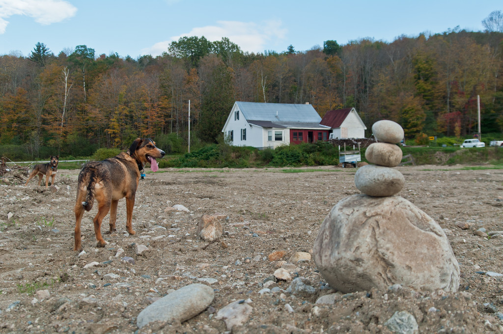 little puppy Echo and Seera surveying the destroyed farm land after we had big machines smooth sand and paper fiber over the rock rubble to re-seed the field back to a hay field to be able to sell it and move on to new land, back in 2012, photo by Adam Ford