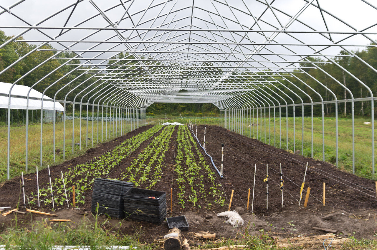 third tunnel still under construction, but with baby kale growing for winter, photo by Adam Ford