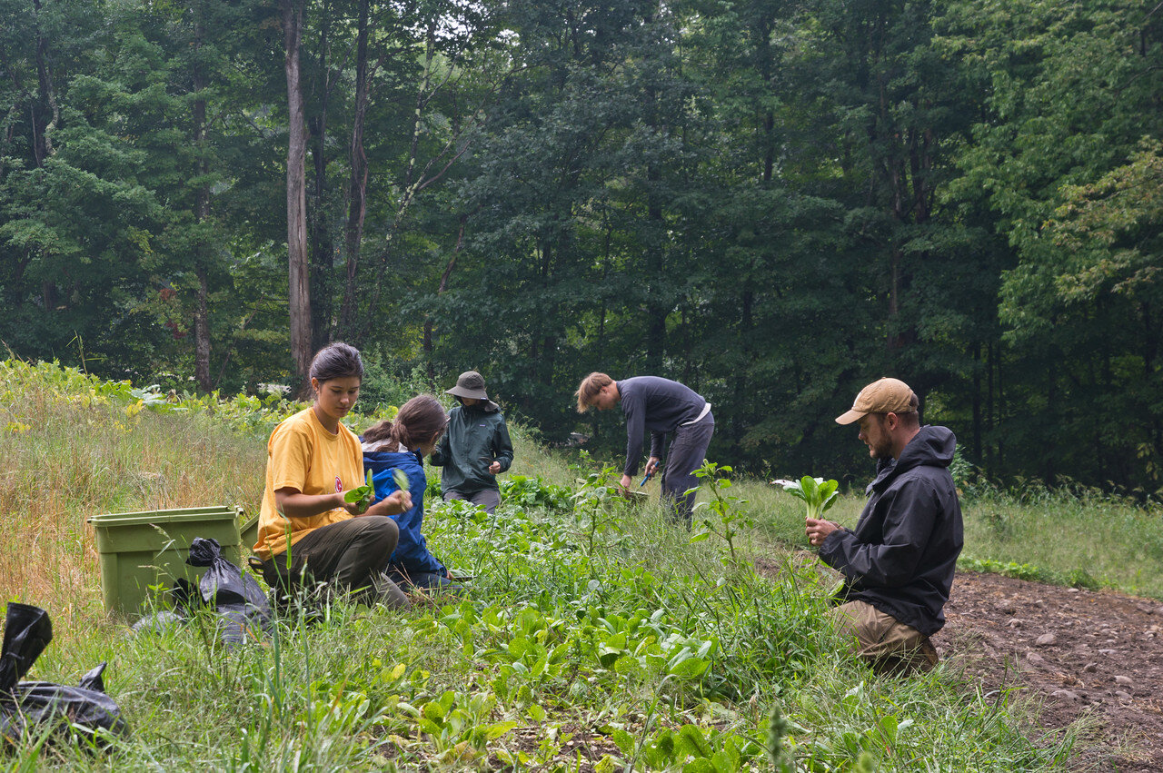 the crew harvesting some weedy bok choi and spinach, photo by Adam Ford