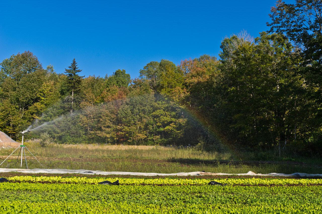 when the irrigation gun makes a rainbow, photo by Adam Ford