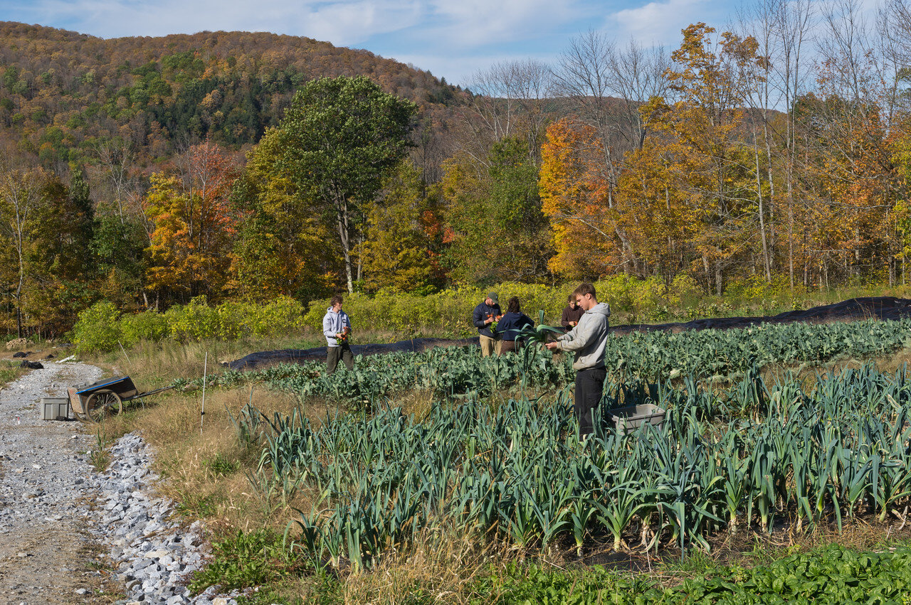 crew harvesting leeks and beets on this gorgeous fall hillside, photo by Adam Ford