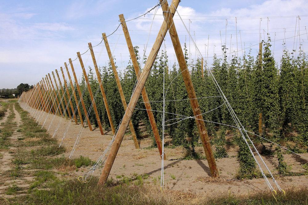 Selecting The Best Hop Poles Trellis Design Pine River Group