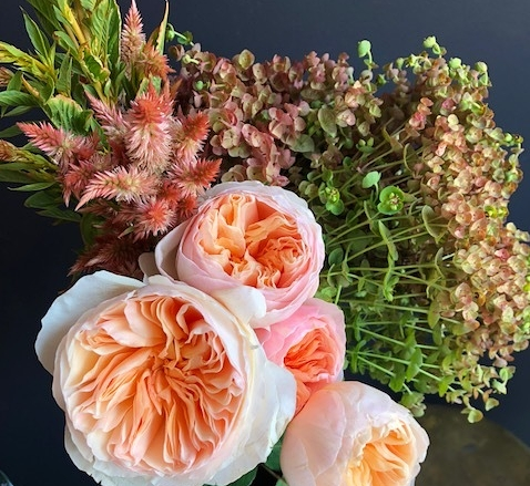 Pictured: David Austin Juliet Garden Roses