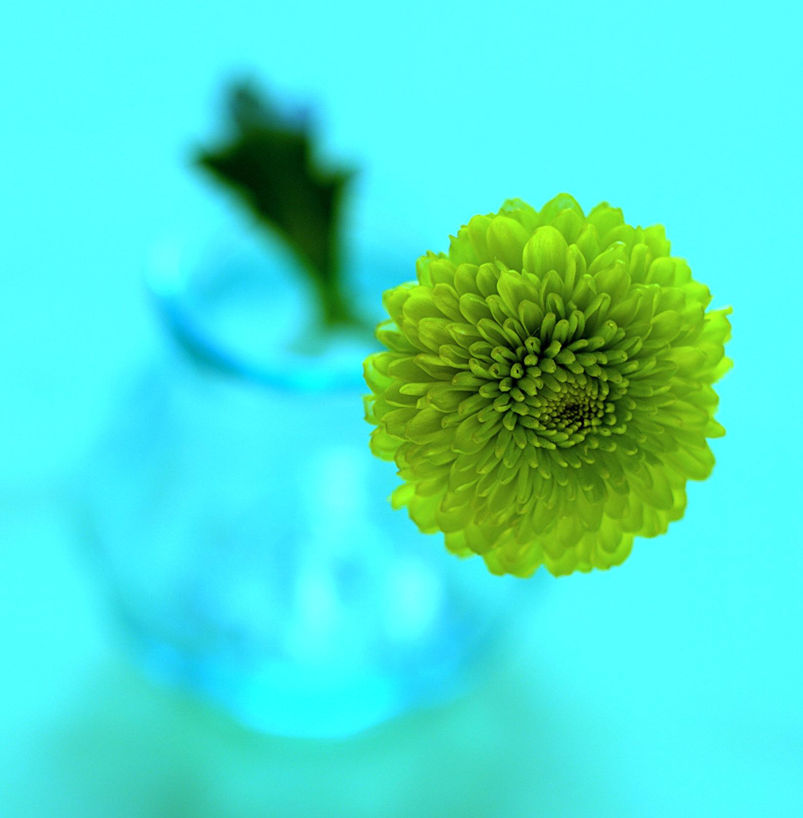 greenflower.jpg