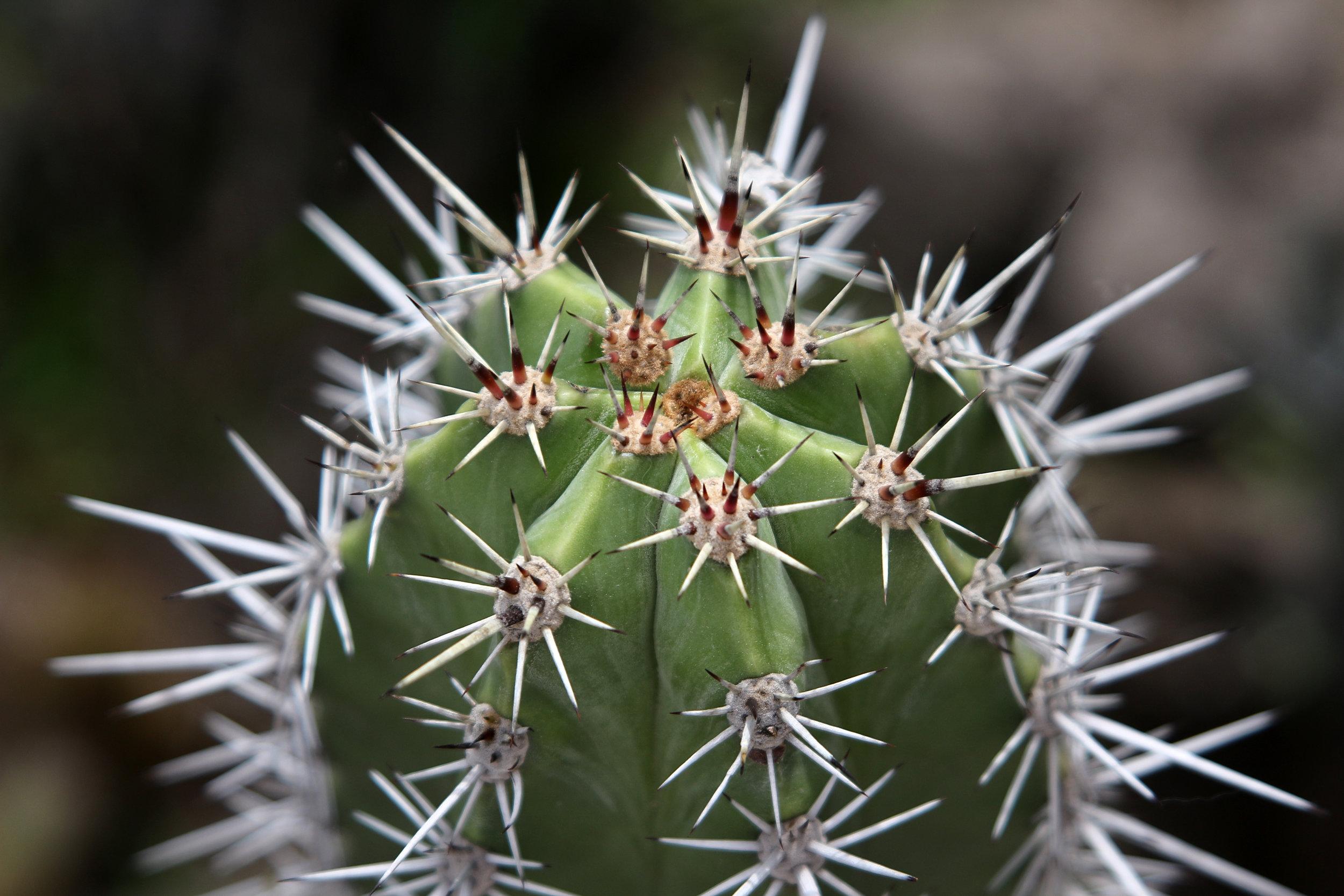 cacti-2016-Mexico.jpg