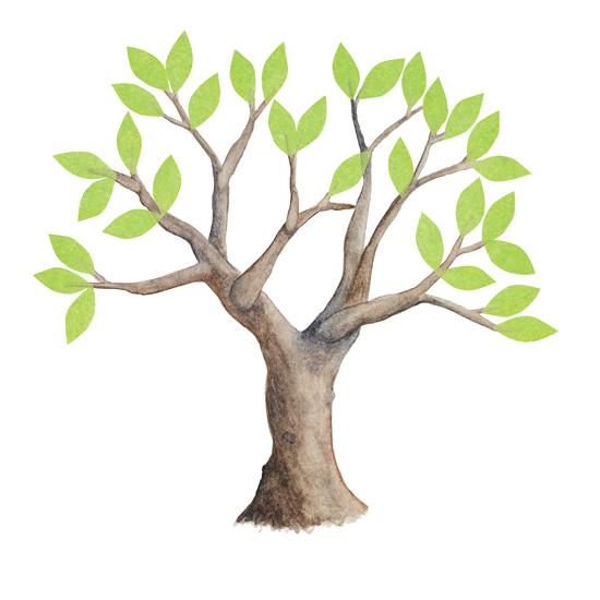 Matheson-Christie-TreeMagic-11.jpg