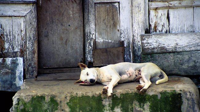 Bali Street Dogs.jpg